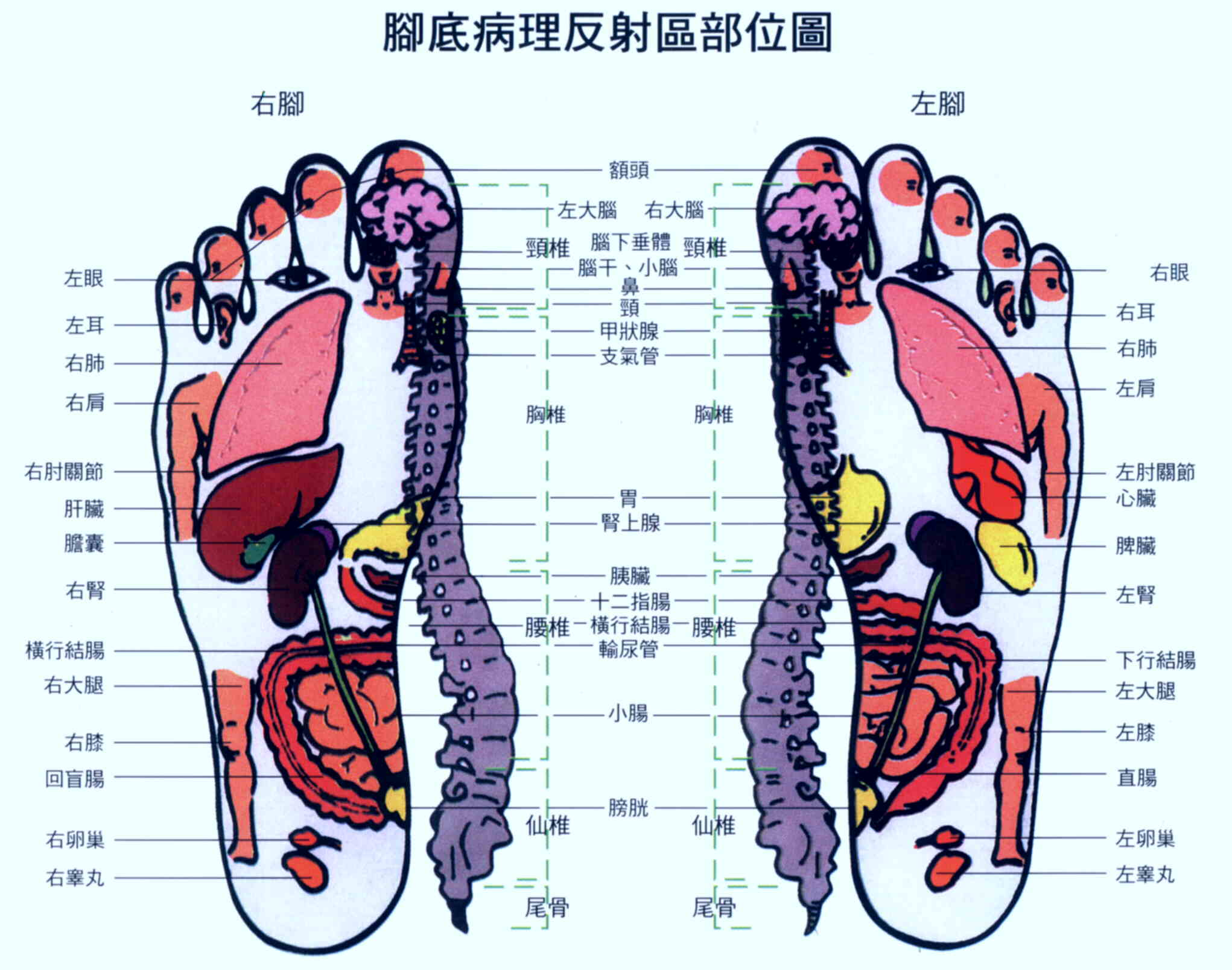 Foot Massage And Reflexology